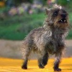 Toto, little dog too, Scheiss Weekly