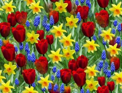 spring flowers, Easter, Scheiss Weekly