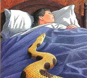 Speckled Band, snake in the bed