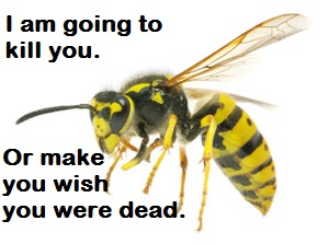 wasp, killer wasp, buzzing wasp