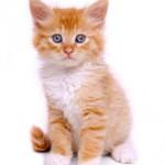 scheiss weekly pussy, scheiss weekly kitten